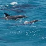Морская прогулка в «Дом дельфинов», Хургада