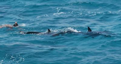 Красное море, морская прогулка в дом дельфинов
